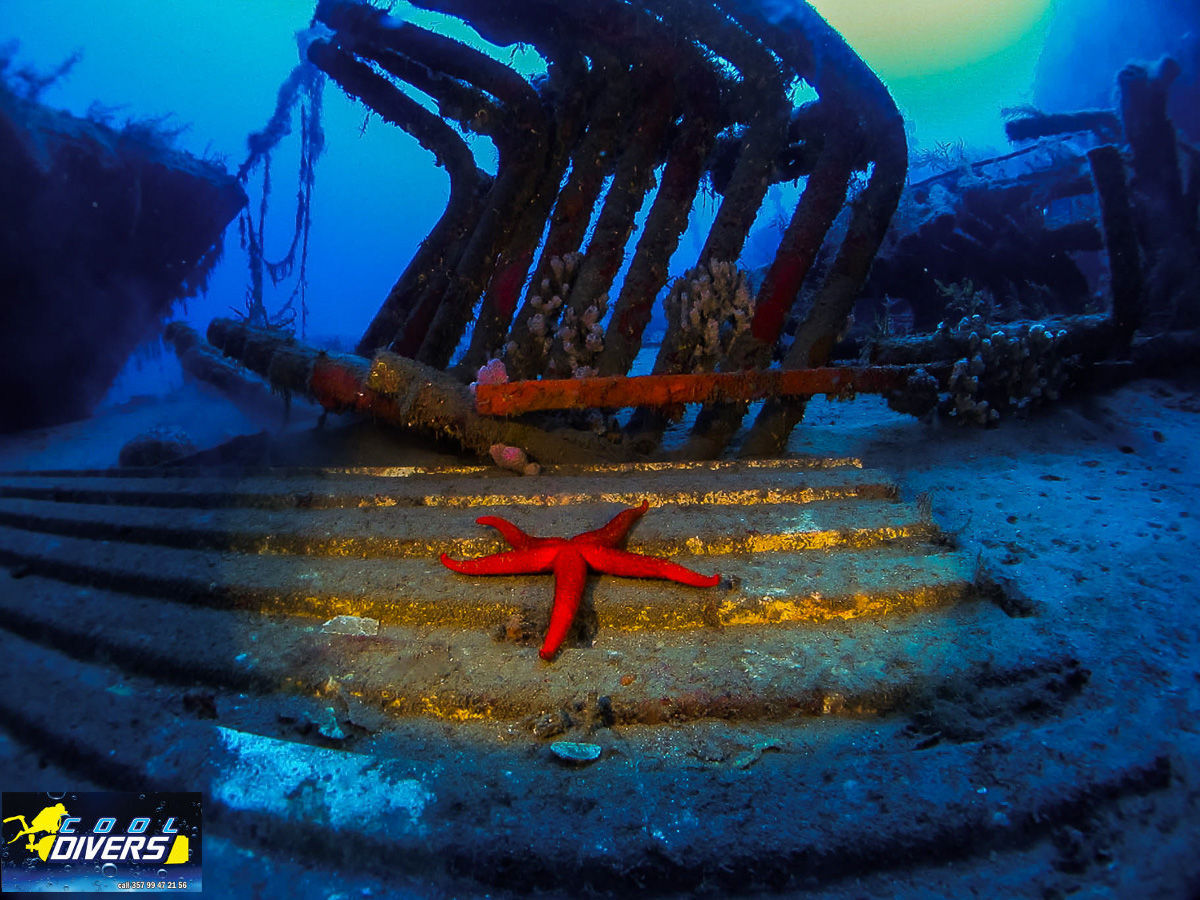 Cool Divers Latchi - wreck